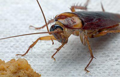 Ловушка и гель от тараканов Тайга: отзывы, описание