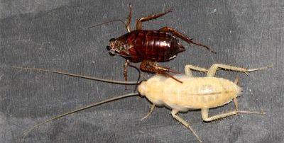тех условиях если завелись тараканы приметы комплекты термобелья Купить